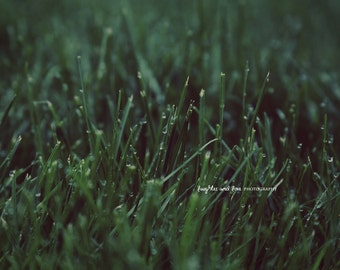 Wet Grass Fine Art Photography Whimsical Dreamy Green Water Drops Dew Abstract Spring Summer Minimalist Monochromatic Home Decor Wall Art