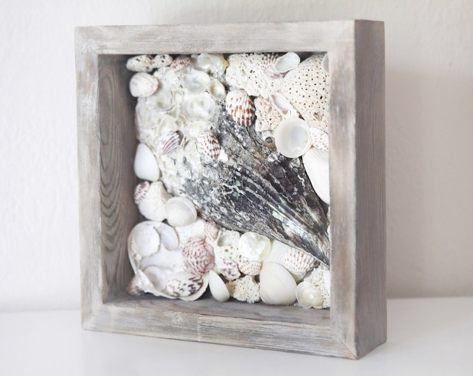 Beach Decor Shells from Gulf of Mexico Driftwood Frame by SEASTYLE
