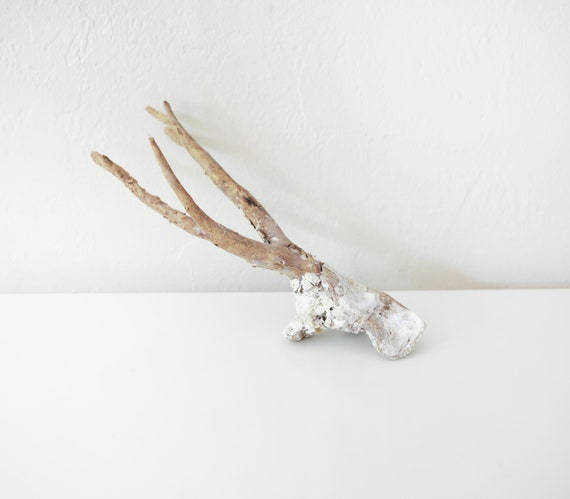 Driftwood Branch Corals Beach Decor by SEASTYLE