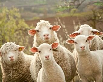 Sheepwool Tasting