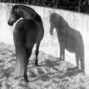 Edition Print Wall Decor Equine art, Spanish Stallion Horse Photography SPIRIT
