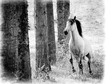 Horse Art - CAMINO - Lusitano Horse,  Fine Art Print - Wall Decor, Equine Photography, Rustic.