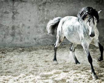 VIDA, Andalusian Horse, Dapple Grey, Edition Art Print, Wall Decor, Equine Art, Horse photography
