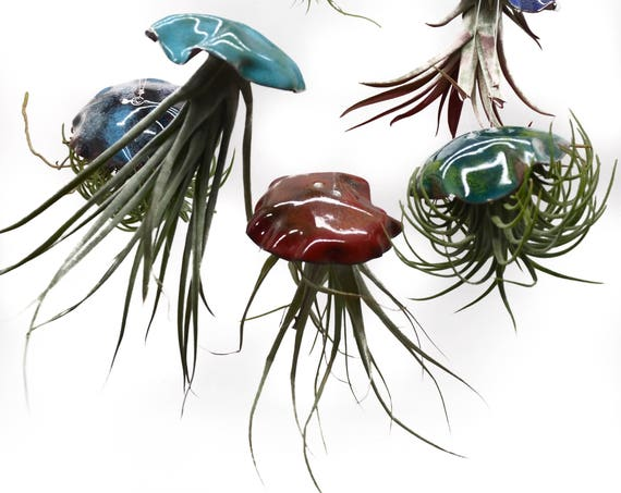 Kiln Fired Vitreous Enamel Airplant Jellyfish