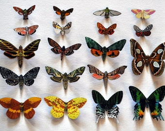 Moth Magnets Set of 6 Multi Color Insects Refrigerator Magnets Kitchen Decor