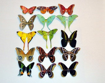 Moth Magnets Set of 10 Multi Color Insects Refrigerator Magnets 1 to 4 inches