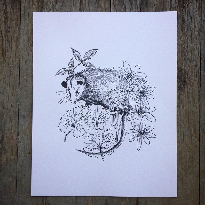 flora and fauna Possum Letterpress Print with Native Flowers jack in the pulpit bloodroot animal art letter press line art