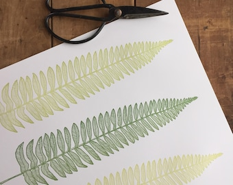 Three Ferns Letterpress Print 11x14