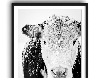 Hereford Cow Photo Print, Black and White Cow Print, Rustic Farmhouse Decor, French Country, Modern Farmhouse Style Decor, Large Wall Art