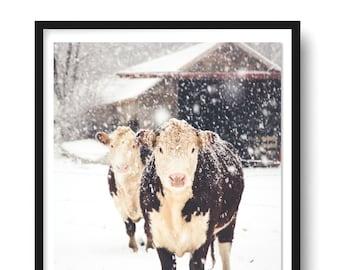 Hereford Cow Print, Cow Art, French Country Decor, Farmhouse Print, Snowy Cows, Farmhouse Rustic Decor, Large Wall Art, Fine Art Print