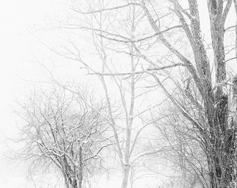 Winter Landscape Snowy Trees Lace Minimal Rustic White Gray Grey Snow Photograph Black And Large Wall Art Fine Print