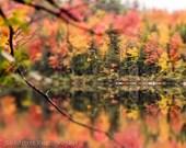 Autumn Art Print, Fall Foliage, New England Fall Leaves Decor, Autumn Abstract Art Print Photo, Colorful Fall Print Red Yellow Orange Leaves