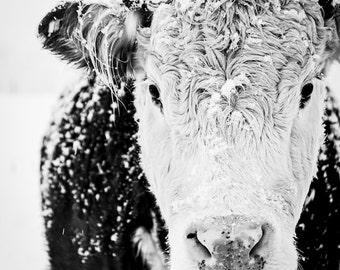 Cow Art, Cow Print, Farmhouse Print, French Country Decor, Black and White Cow, Winter Art, Farmhouse Decor, Rustic Decor, Large Wall Art