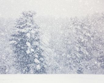 Winter Snow Snowstorm Winter Art White Fir Trees Woodlands Snowstorm Green White Gray Dreamy Winter Photograph, Fine Art Print
