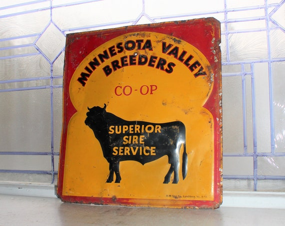 Vintage Tin Sign Minnesota Valley Breeders Co-op Cattle