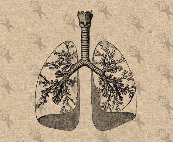 Imagen Vintage humano anatómico pulmones corazón Retro dibujo