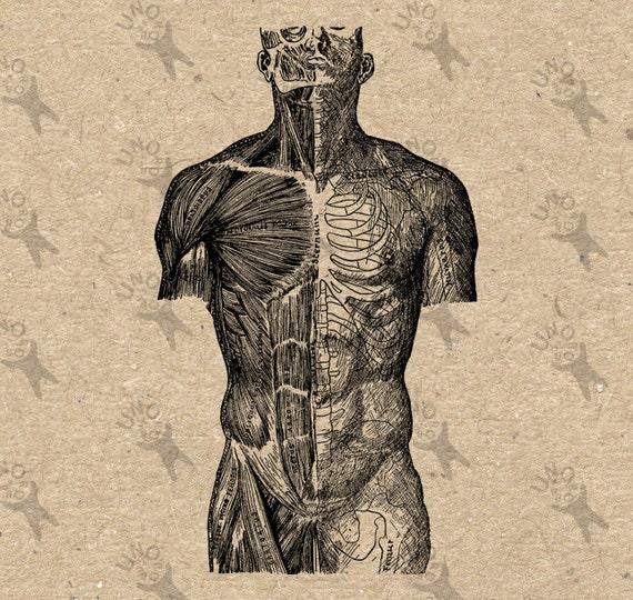 Vintage imagen humana anatómica músculos cuerpo Retro dibujo | Etsy