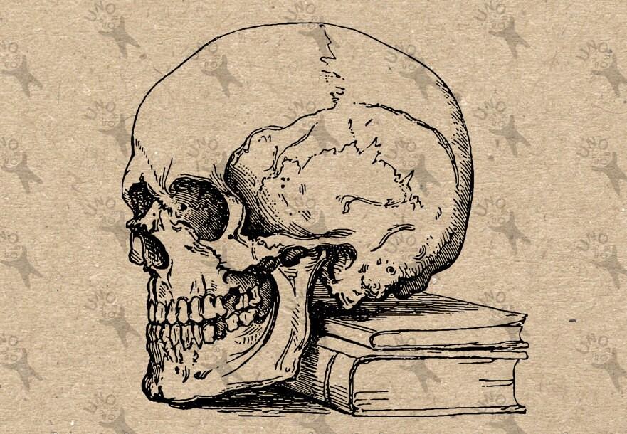 Vintage retro dibujo libro de anatomía de cráneo humano imagen | Etsy