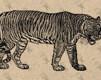 Vintage image Tiger picture Instant Download printable clipart digital graphic for scrapbooking, fabric transfer, t-shirts, bags etc 300dpi
