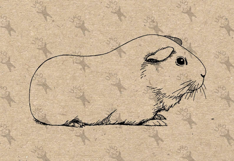 0b4f02b66 Vintage retro drawing image Guinea Pig picture Instant
