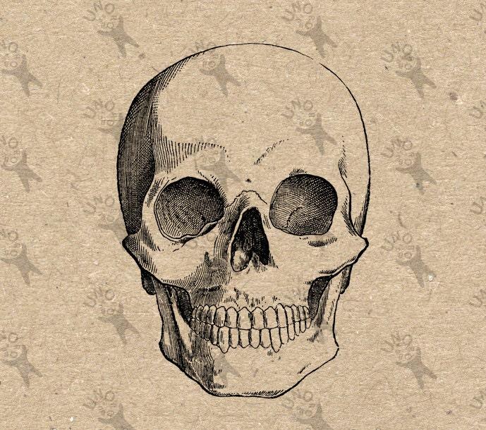 Vintage retro dibujo Halloween de anatomía de cráneo humano | Etsy