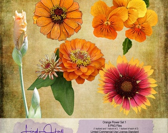Orange and Peach Flowers Set 1 (Extracted)