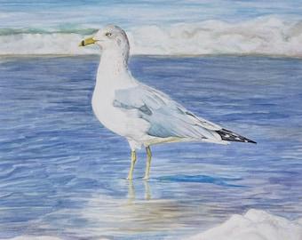 "Ocean Beach Seagull Original Framed Watercolor 18"" x 25"""