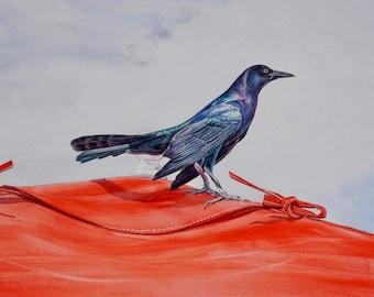 Original Grackle Bird on Red Tent Original Framed Watercolor
