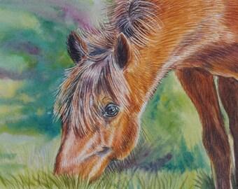 Wild Horse Original Watercolor