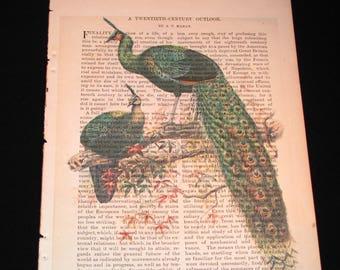 Green Peafowl Book Art