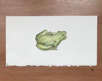 Watercolor Frog Original Painting