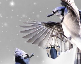 Cardinal Greeting Cards, Christmas, Bird Lovers,  (Set of Six)