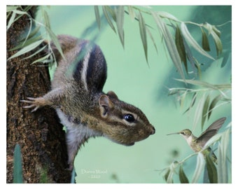 ASSORTED - ADORABLE Chipmunk, Squirrel, Bird Greeting Cards, Christmas, Bird Lovers,  (Set of Ten Assorted)