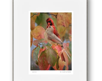 Kissing Cardinal Art Print   Dogwood  Fall Colors, Photo Art,   Illustration   5x7 Matted art print - Fits an 8 x 10 frame (not included)