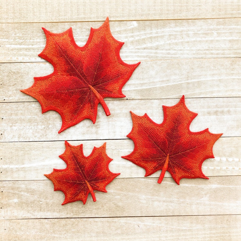 Autumn Maple Leaves  Choose from Three Sizes image 0