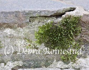 Heart Moss, Nature Photo, Moss, Heart, Zen Art, Yoga, Reiki