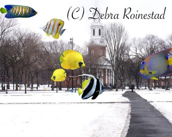 Mi Amigos, New Haven, CT, Fish Art, Photo, Collage