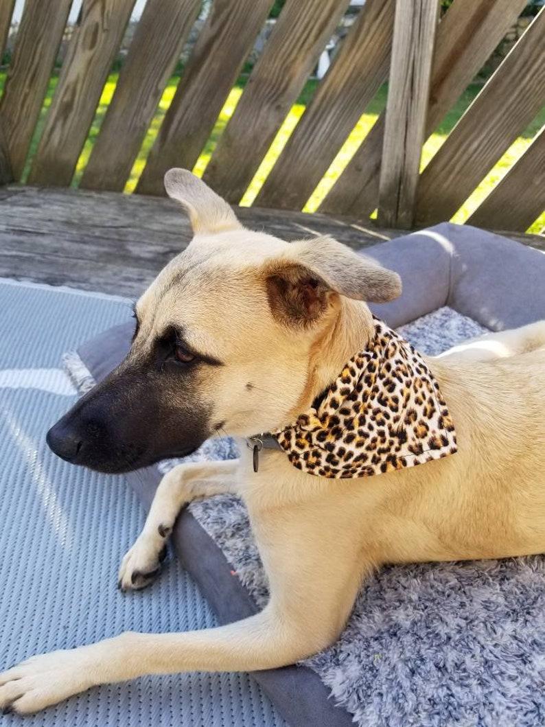 Leopard pet bandana dog or cat over the collar