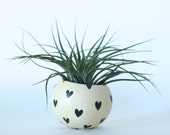 Air Plant Planter with Air Plant - Natural with Black Hearts.