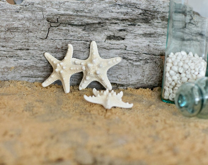 "Beach Wedding Decorations - Starfish -  Knobby Starfish - Small Natural Star fish - 2"" - 3""  Knobby Starfish"