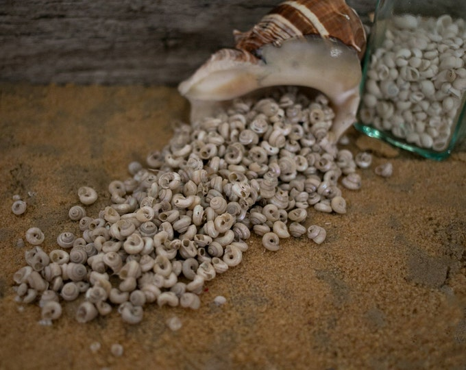 Beach Decor Seashells - Pearl Turbo Shells  1/2 Cup for Sailor's Valentines, Nautical Decor, Beach Weddings or Crafts