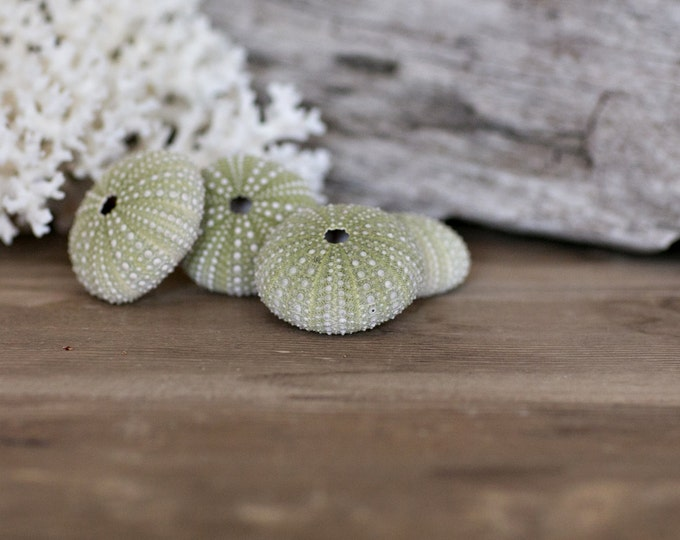 Beach Decor - Green Sea Urchins - 4 pcs for Beach Decor, Beach Weddings or Crafts - Nautical Decor