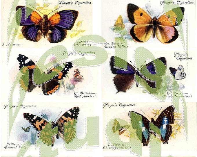 Silkie Images #4 - Butterflies