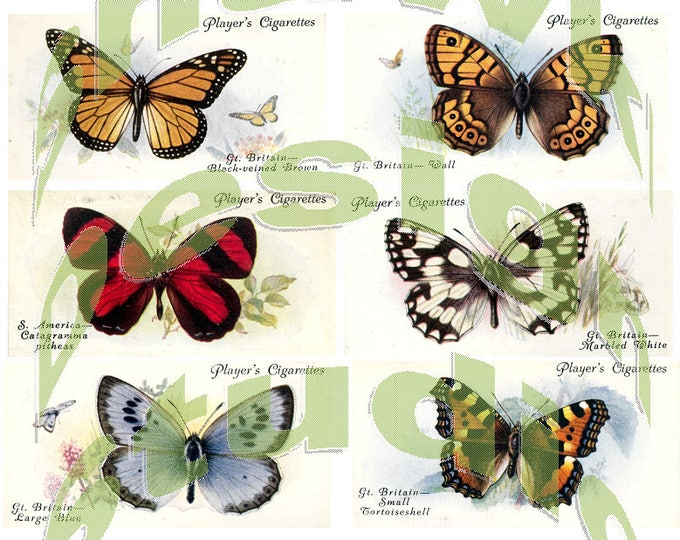 Silkie Images #2 - Butterflies