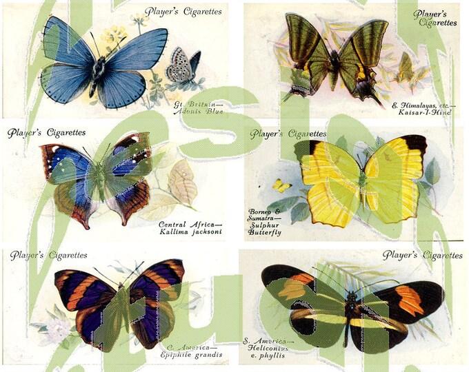 Silkie Images #6 - Butterflies