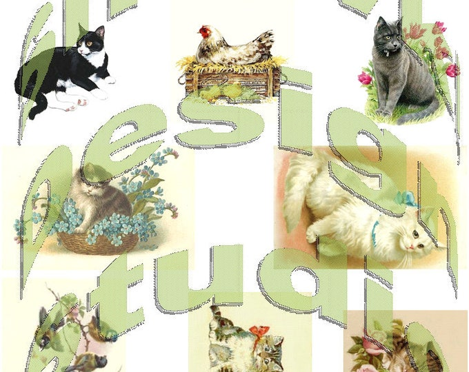 Silkie Images #8 - Cats & Friends