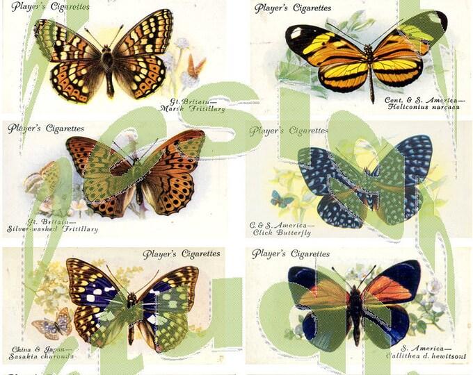 Silkie Images #3 - Butterflies