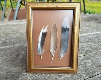 Framed Goldfinch/Dove Feathers/Wall Art/Home Decor
