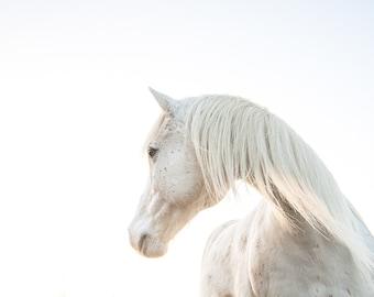 White horse photography, white horse art print. Whisical horse for little girls room decor, nursery wall art photograph gift for horse lover