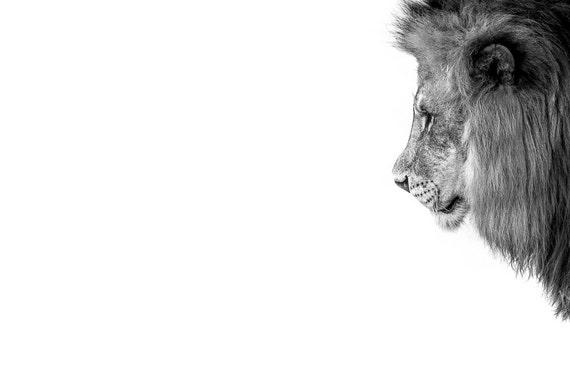 Lion photography wall art lion print home decor man cave | Etsy